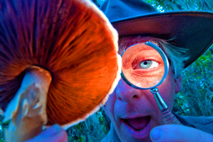 изучение галлюциногенного гриба под увеличительным стеклом