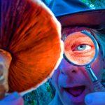 С чем едят галлюциногенные грибы?